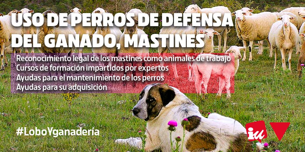 Junta de Castilla y León debe tomar medidas para la convivencia entre el lobo ibérico y la ganadería