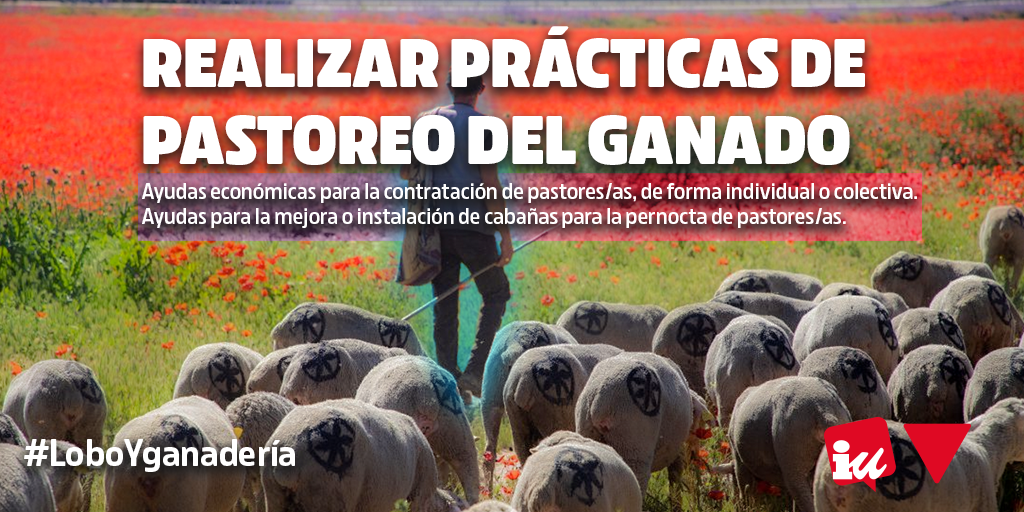 La Junta de Castilla y León debe tomar medidas para la convivencia entre el lobo ibérico y la ganadería #LoboYGanadería